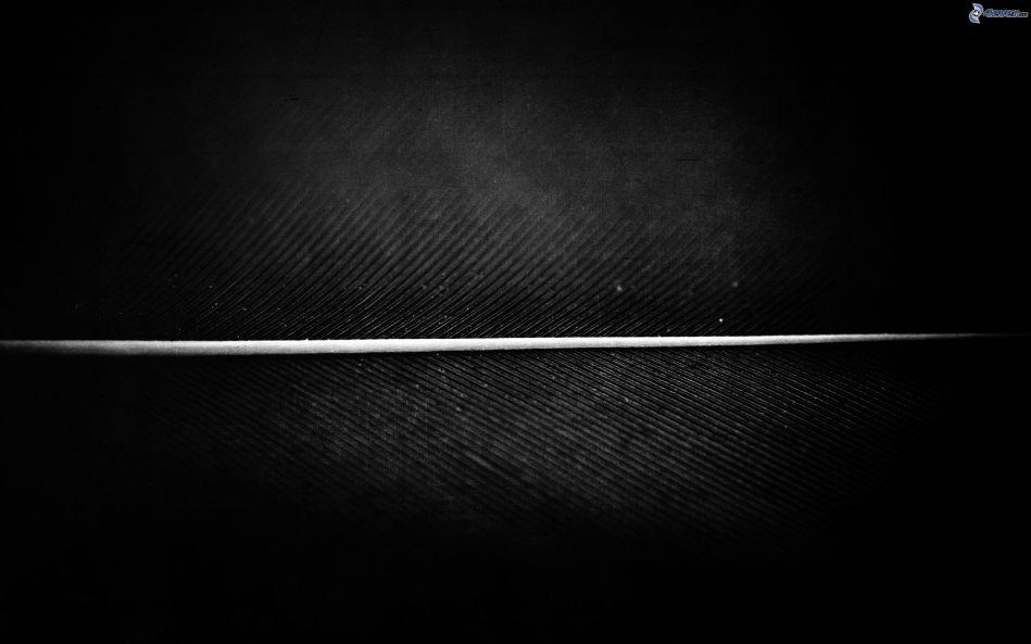 la-ligne-blanche-166198