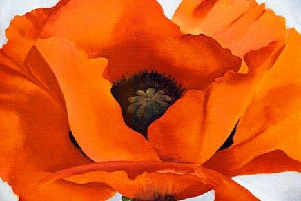 Darija Žilić: Crvenicvijet