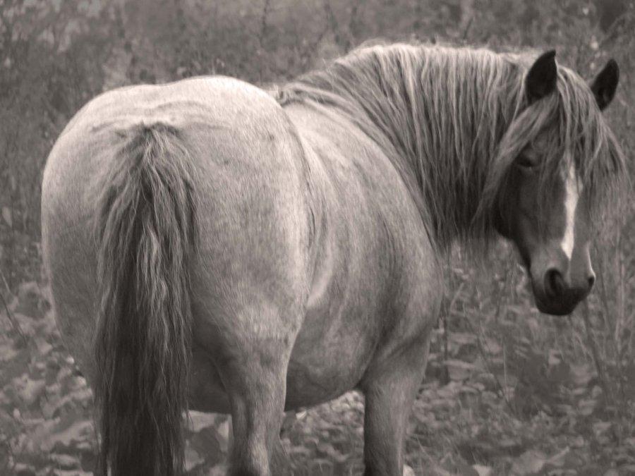 Hrvoje Kraljević: Drš se konjskeguzice!