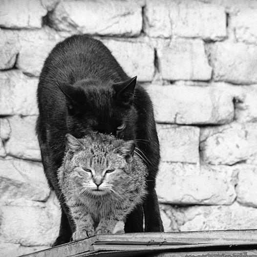 Fotografija: Boris Štajduhar