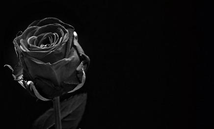Jelka i ružingrm