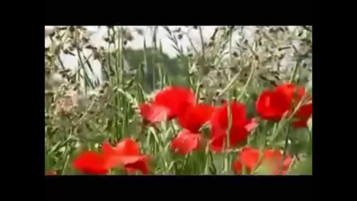 Mihovil Pavlek Miškina: Crveni makovi