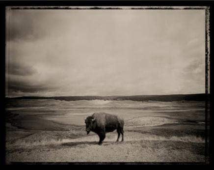Higgsov bizon