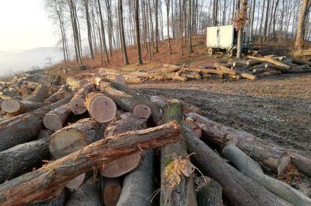 Planinari u šoku: Pred očima nam nestaju šume, ostaju samo pustegore
