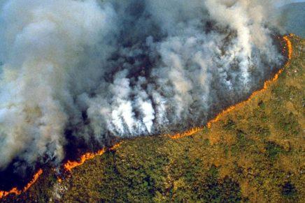 Paljenje Amazonske prašume i politika ultimativnalešinareja
