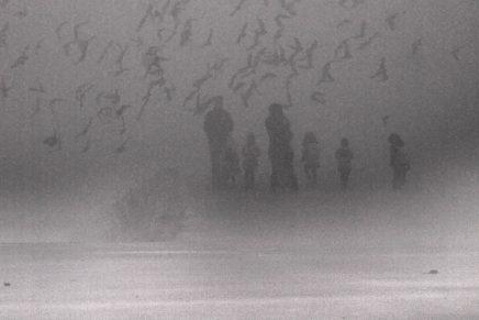Hermann Hesse: Magla