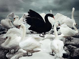 Romano Bolković: Crni labud, ljignje,Bogović…