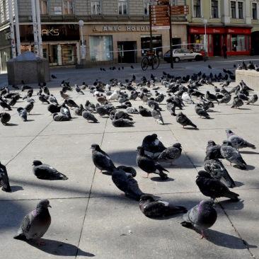 Zagreb_07.04.2020_(24)