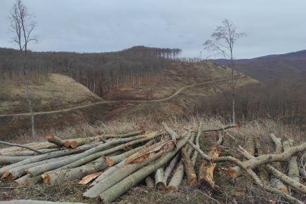 Ukradeno 86 milijuna € drvne mase! EK pokreće istragu Hrvatskih šuma zbog jezivedevastacije