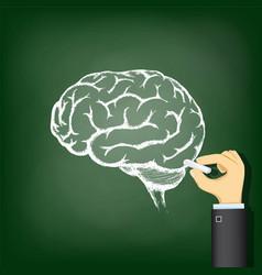 hand-drawing-a-chalk-human-brain-vector-22349491
