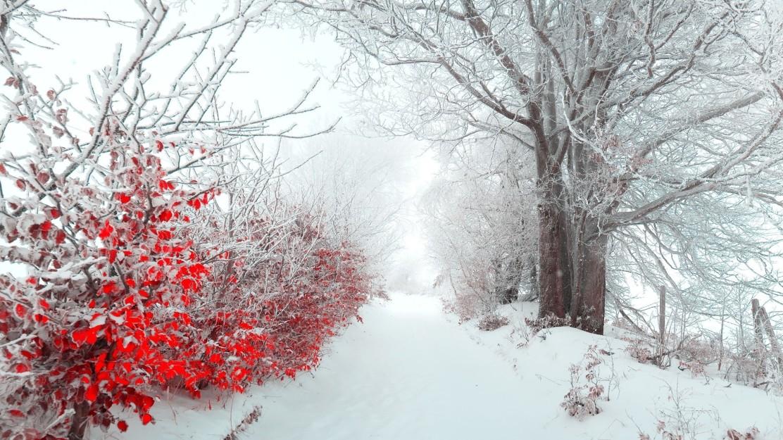 winter-flowers-4