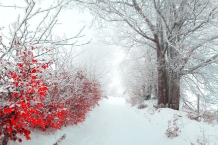 Marijan Grakalić: Pada bijeli snijeg na nedužnocvijeće