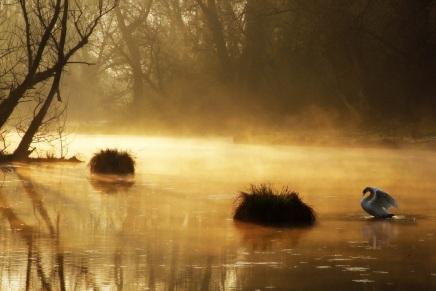 Odabrane najbolje fotografije na temu Priroda u dobaCorone